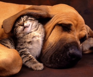 my-best-friend-cat-and-dog-1366x768